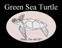 Reptile Buddies Green Sea Turtle by UnicronHound