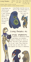Species: Living Geodes by Glasswhistle