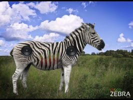 discoZebra by painsi