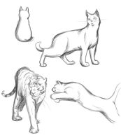 Cat Poses Study by Thilil