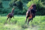 Mare and Foal 24 by MountainViewStock