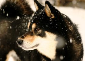 Keiko in the snow 2 by cursedsight