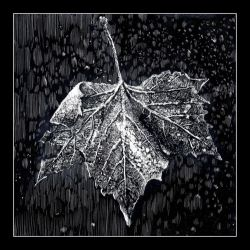 Frozen maple leaf by RoodyN