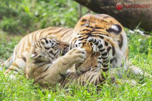 Mother and cub. by Ravenith
