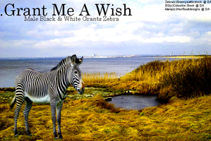 Grant Me A Wish by HoofBeatDesigns