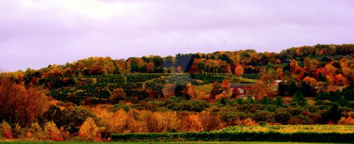 Field View by LadyPhotographer492