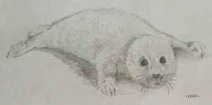 White Baby Seal by kean