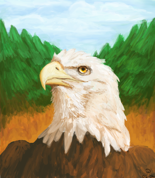 .:eagle:. by wiis