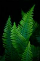 Frondness by LAlight