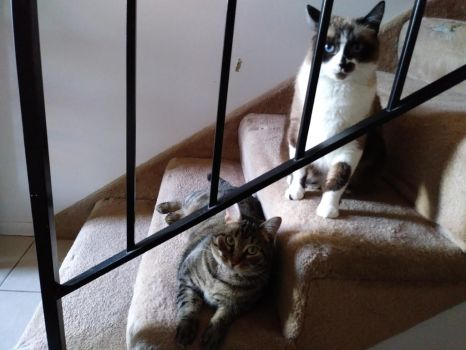 Missy and Lilly on the Stairs #4 by CherokeeGal1975