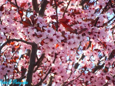 Flowers in a Tree by cecile-photographie