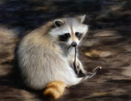 Racoon by Kansey20
