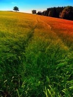 Waving fields of spring by patrickjobst