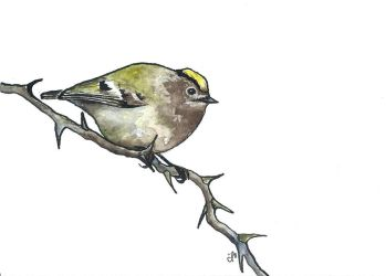 100 Birds: #6 Goldcrest by DundalkChild