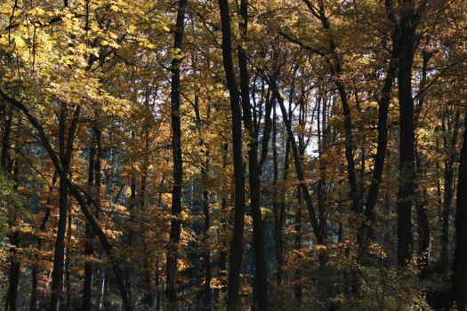 Golden forest by 7DS7