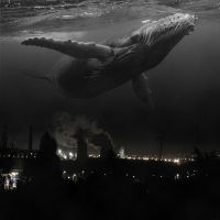 Whaling Above the Industry by Scapetti