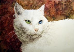 White cat by Mad-Margaret