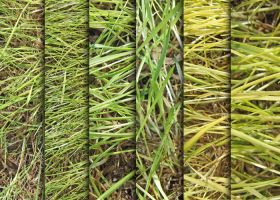 Grass Texture Pack by sdwhaven