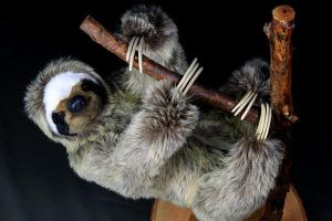 Sloth by LisaAP