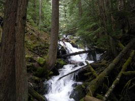 STOCK - Forest River 2 by jocarra