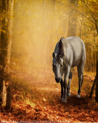 Equine Graphic by Miamouse14