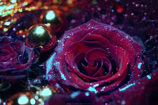 Glitter Rose - Unlimited STOCK by Lilyas