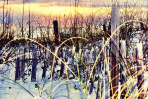 The Reeds by WadeCreativeSuite