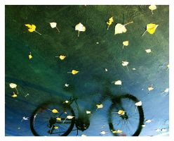my bike fell into a puddle by paupah