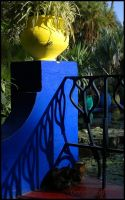 Le chat Majorelle by doriano