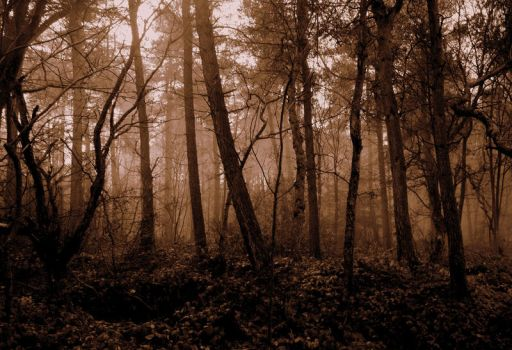 in the forest of the fae by RickHaigh