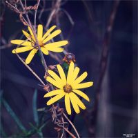 Natures Revival 074 by Frank-Beer