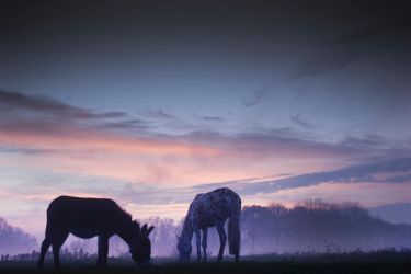 my horse and my donkey by eileenvanuitert