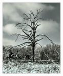 Story of a  tree by incredi