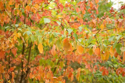 Leaves 010 by MonsterBrand-stock