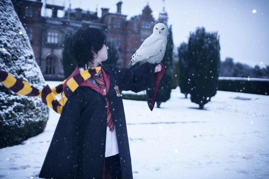 Harry Potter: Hedwig by CMOSsPhotography
