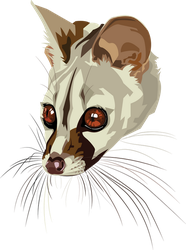 Genet by Blackpassion777