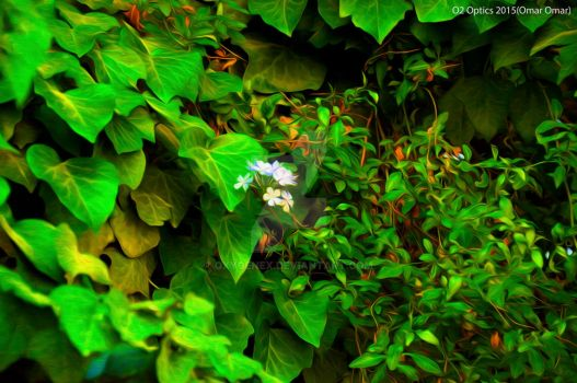 Lone white in a vast green(Oil painting filter) by OxygenEX