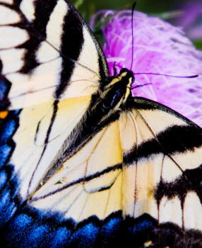 V BUTTERFLY by etereal