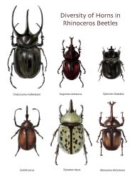 Rhino Beetles by bigredsharks