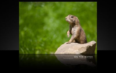 on the watch - wallpaper by oetzy