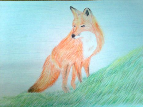 Fox by CocoAnime