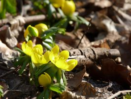 Spring is coming by Fenmar