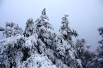 carpet of snow on trees by LoveForDetails