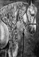 Drawing- Andalusian Horse by Ennete
