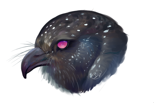 Oilbird Headshot by Kasaurus