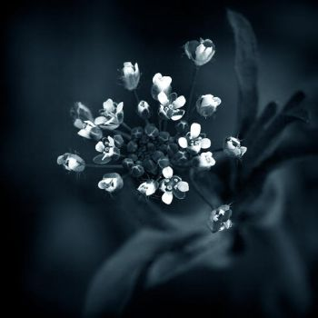 flowers of night by julie-rc