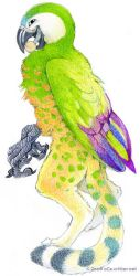 Parrot Gryphon by kattything