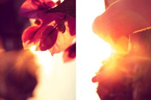 Here comes the sun by Boritah