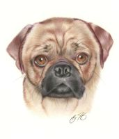 Pug Commission by golfiscool