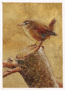 aceo (afa) wren by kailavmp